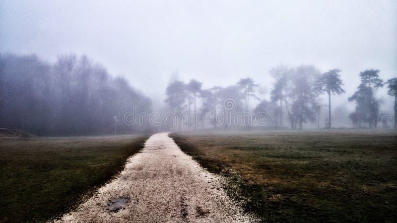 Foog στο πάρκο με το effekt στοκ φωτογραφία