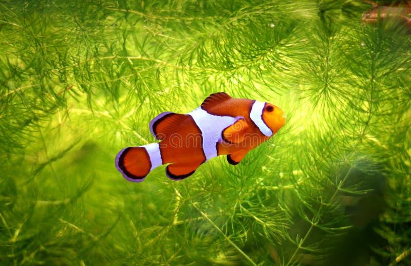 foolfish royaltyfria bilder