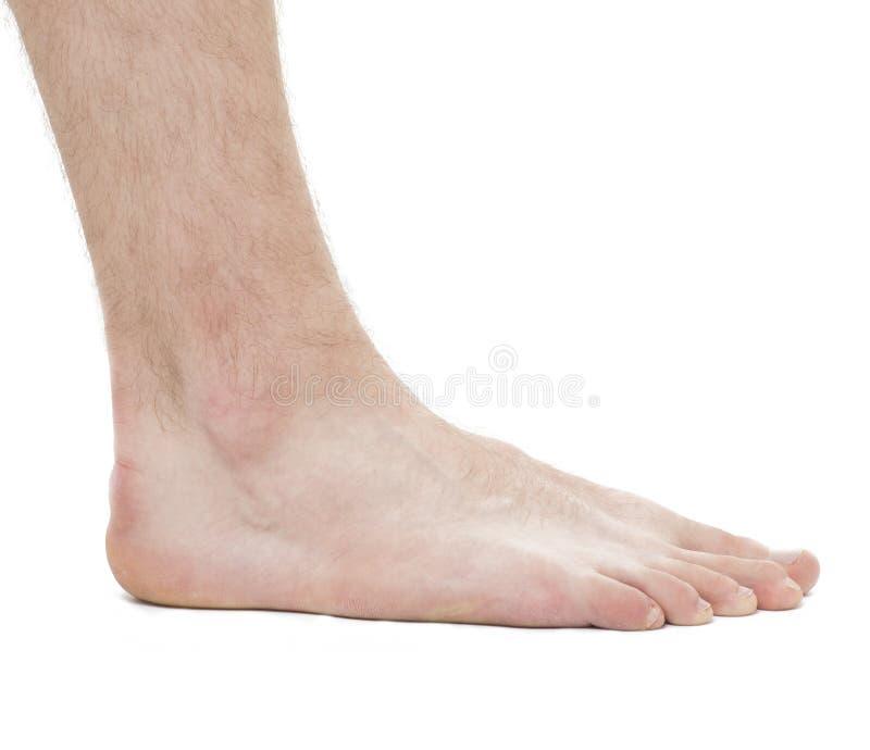 Foot - Anatomy Male - Studio photo isolated on white royalty free stock photos