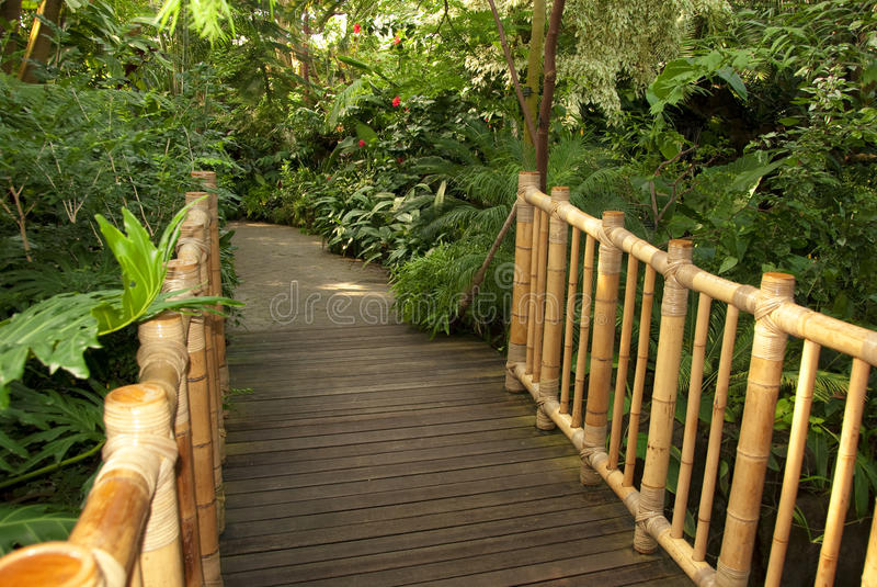 Download Foot Bridge Leading To A Tropical Trail Stock Photo - Image: 11638506