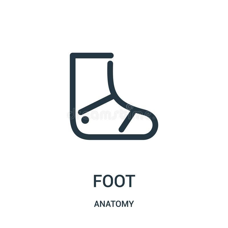 foot icon vector from anatomy collection. Thin line foot outline icon vector illustration. Linear symbol for use on web and mobile stock illustration