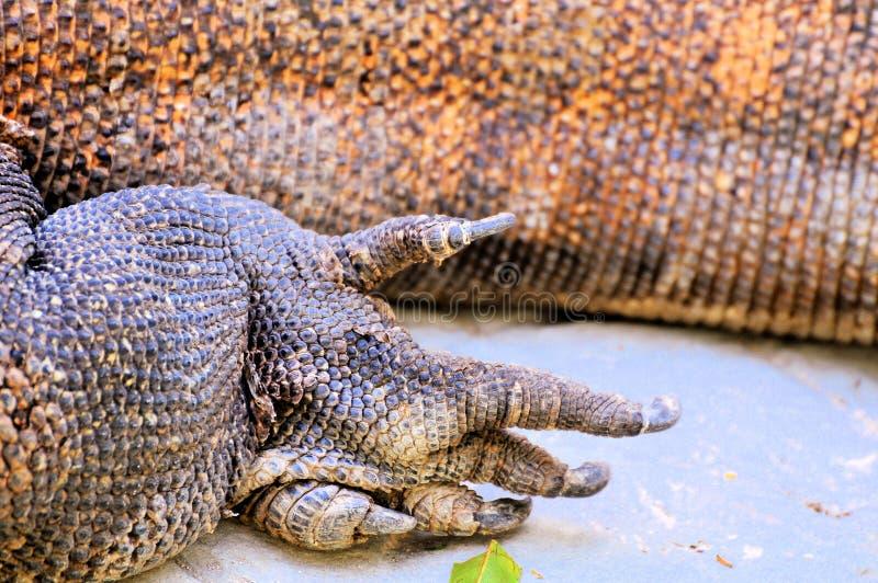 Komodo Dragon Claws For Sale