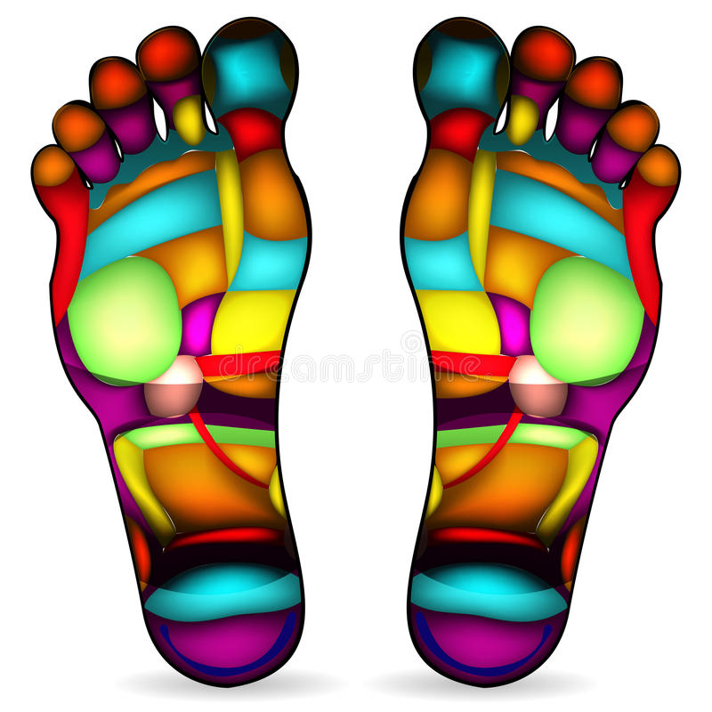 Download Foot massage chart stock vector. Image of circulation - 20185388