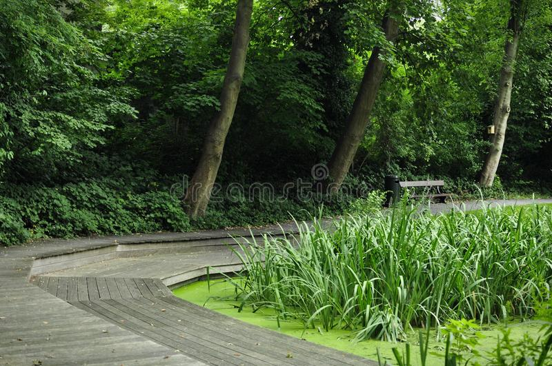 Foot path around the pond. Wooden walking path surrounded by wild trees around a cane pond, with a bench, a litter bin and a bird feeder stock photography