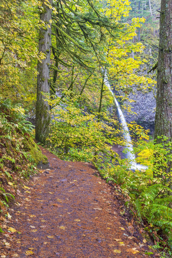 Foot Path To Pony Tail Falls In Oregon Royalty Free Stock Photo
