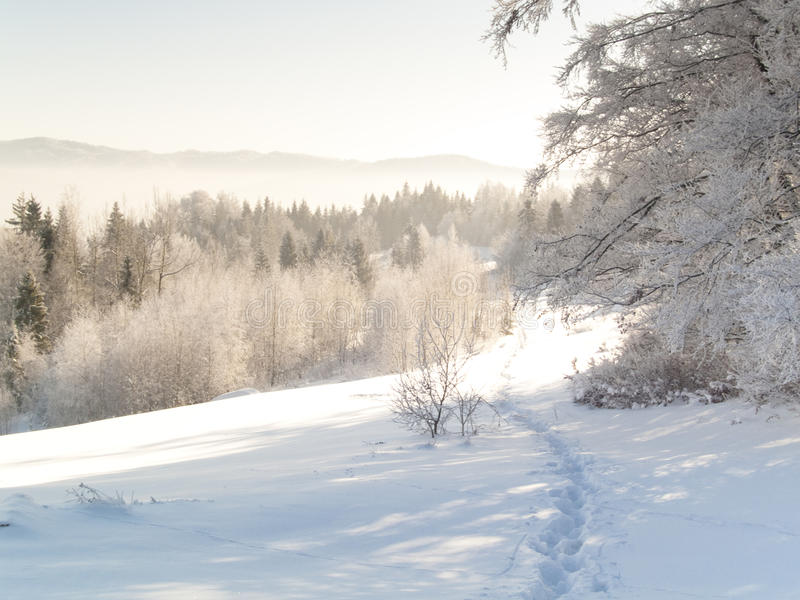 Download Foot path - winter stock image. Image of field, extreme - 12313451