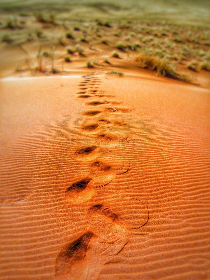 Foot Prints On Desert During Daytime Free Public Domain Cc0 Image