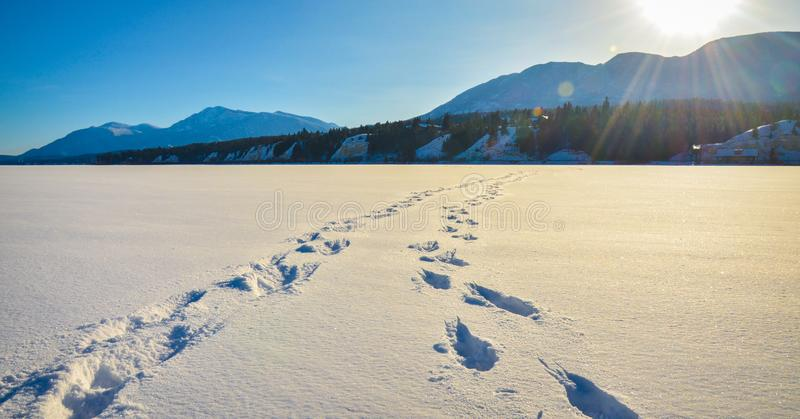Foot prints in the snow, winter mountain landscape. Foot prints in the snow across a frozen lake with sun flare and snow covered mountains in the background. A stock photography