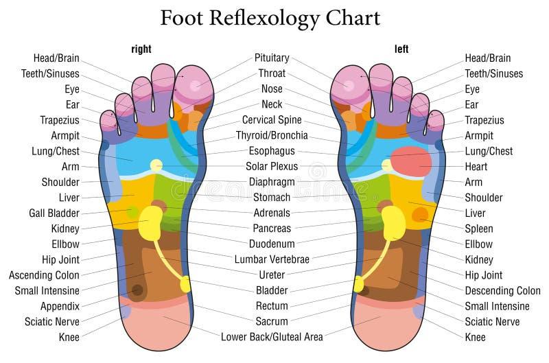 Foot reflexology chart description stock photos