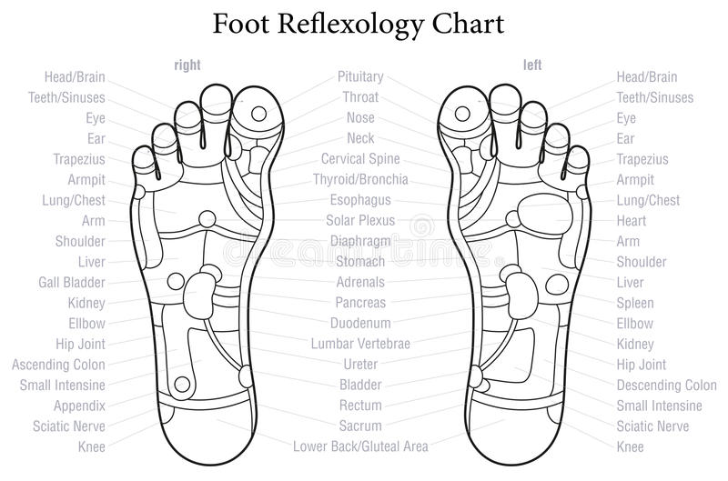 Foot Reflexology Chart Outline. Foot reflexology chart with accurate description of the corresponding internal organs and body parts. Outline vector illustration vector illustration