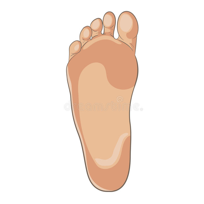 Foot sole illustration for biomechanics, footwear, shoe concepts, medical, health, massage, spa, acupuncture centers. Realistic cartoon style, colored with stock illustration
