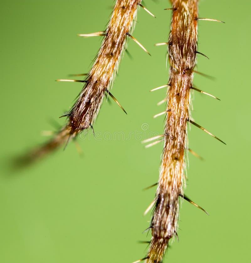 Foot spider. Super Macro royalty free stock photos