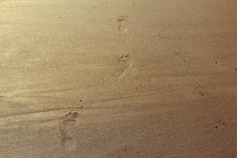 Foot steps in beach sand stock photo