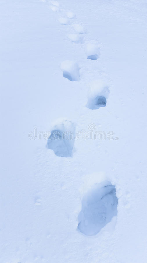 Foot steps in big snow royalty free stock image