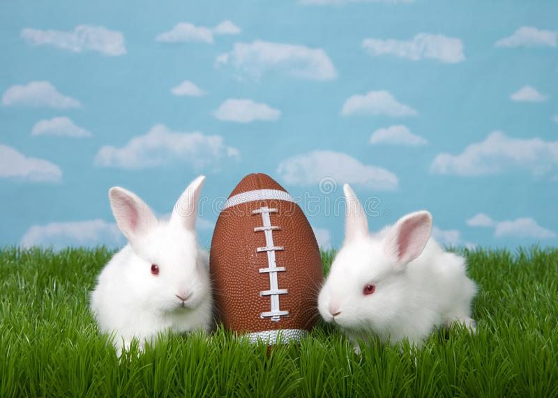 Football bunnies in backyard grass. Two white albino baby bunnies with a American football in green grass with blue sky background clouds royalty free stock photography