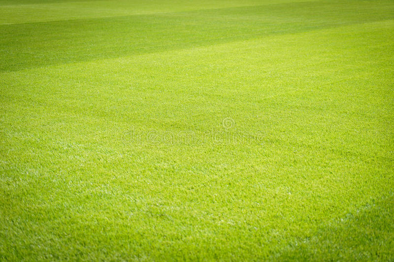 Seamless Vinyl Photography Backdrop Football Stadium Match: Football Field Background Stock Image. Image Of Clean