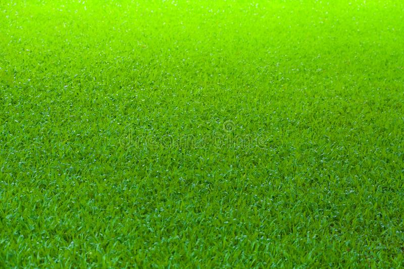 Football field green grass pattern texture background stock image