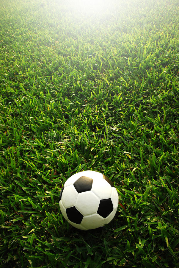 Football field soccer. Stadium on the green grass blue sky sport game background for design stock image