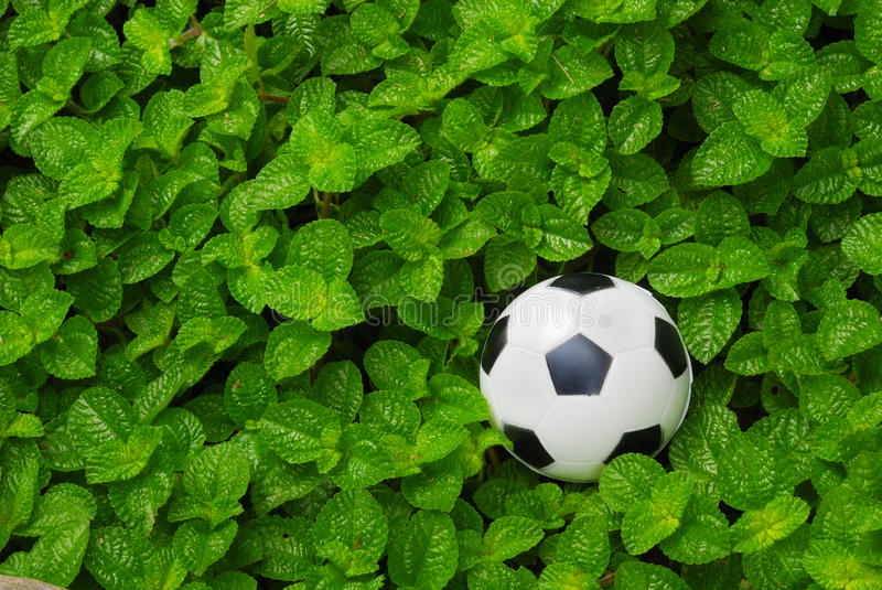 Football In Grass Royalty Free Stock Photography