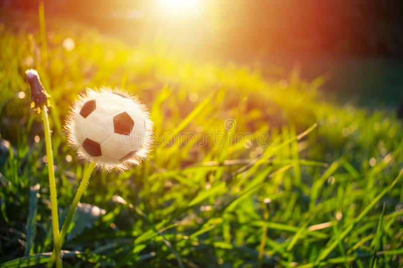 Football soccer ball in the form of dandelion flower on green gr. Ass against the background of sunlight. World Cup, Winner, championship, competition concept stock photo