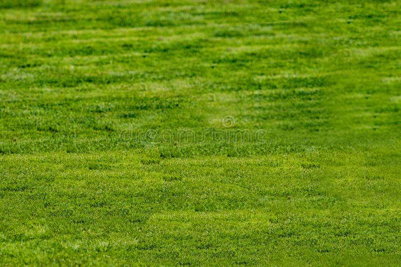 Football court with green grass daytime empty royalty free stock image