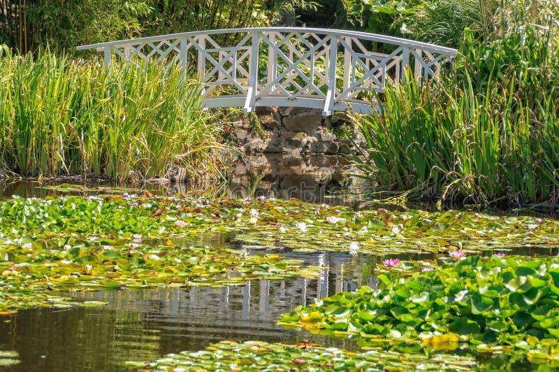 Footbridge над прудом лилии - Хобартом стоковые изображения rf