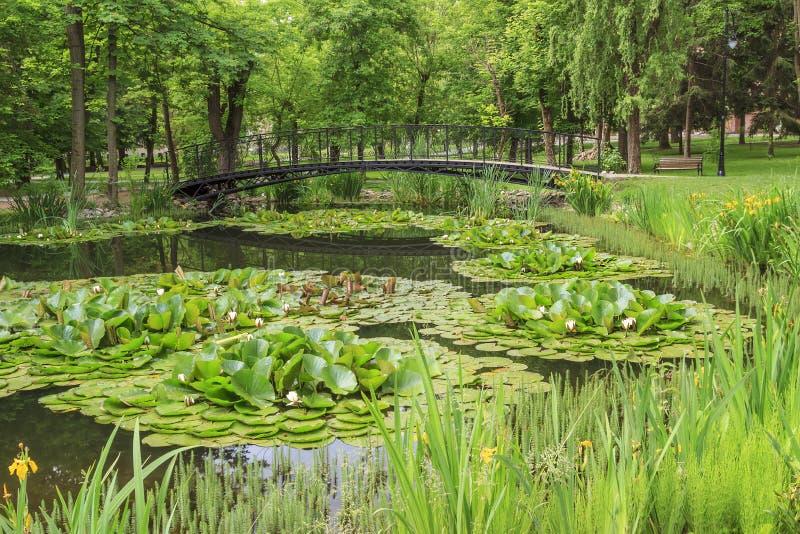 Footbridge над прудом в парке города стоковая фотография rf