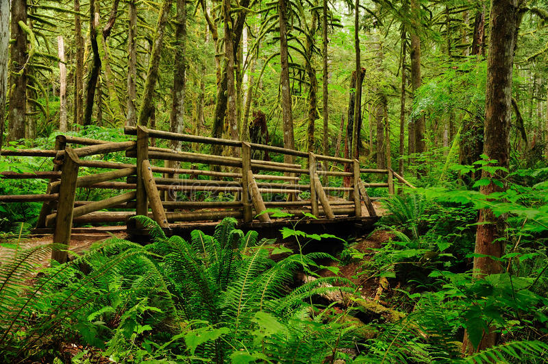 Download Footbridge in forest stock photo. Image of green, trail - 10477720