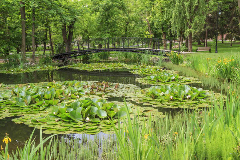 Footbridge over a pond in city park. And water lily flowers royalty free stock photography