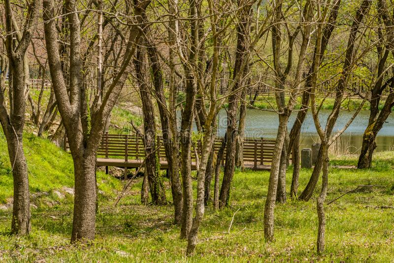 Footbridge and small pond. Behind grove of leafless trees on early spring day stock photo