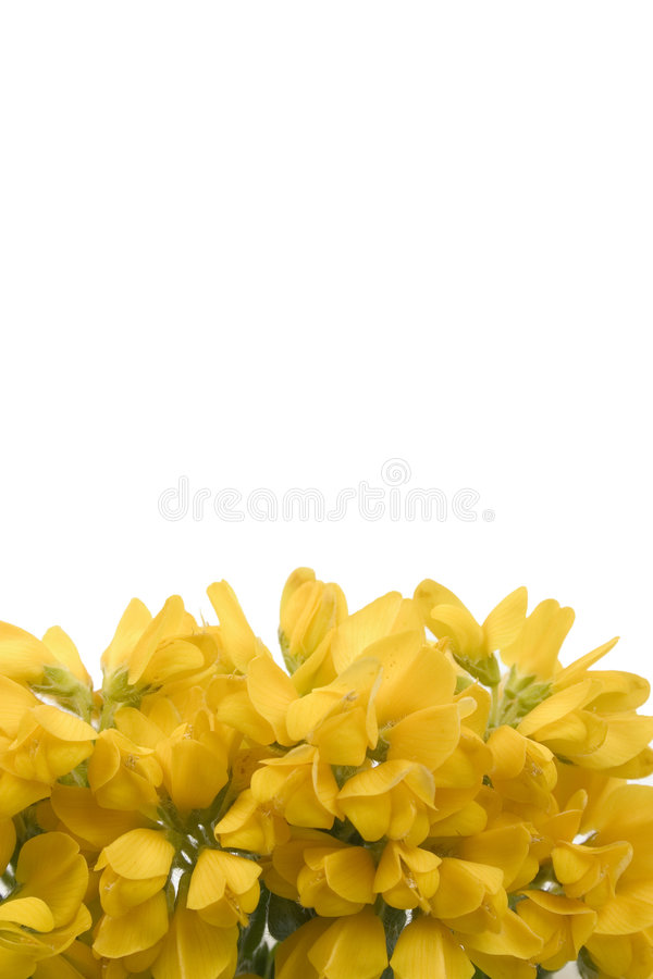 Download Footer1 żółte kwiaty zdjęcie stock. Obraz złożonej z lato - 125212