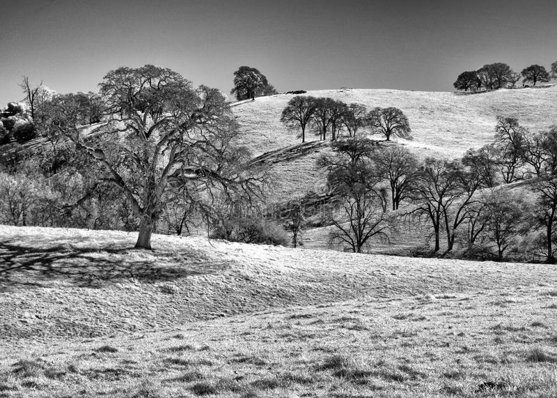 Foothill trees, black and white royalty free stock images