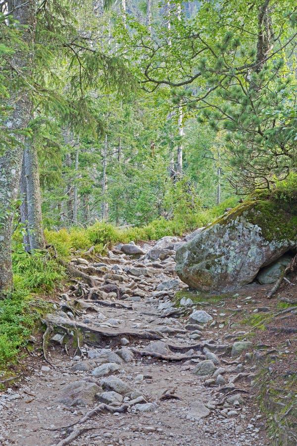 Foothpath in alte montagne di Tatras fotografia stock libera da diritti