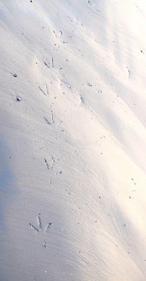 Footmarks do pássaro em Sandy Beach - fundo e textura abstratos fotos de stock