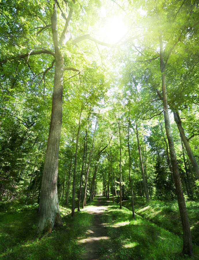 Download Footpat Between Trees In Green Forest Stock Photo - Image of rural, outdoors: 28246676