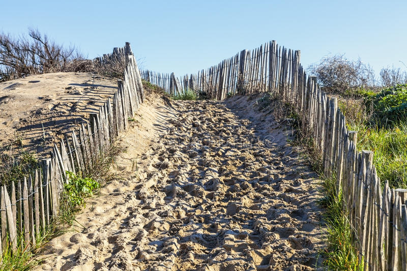 Download Footpath On The Atlantic Dune In Brittany Stock Image - Image: 33453239