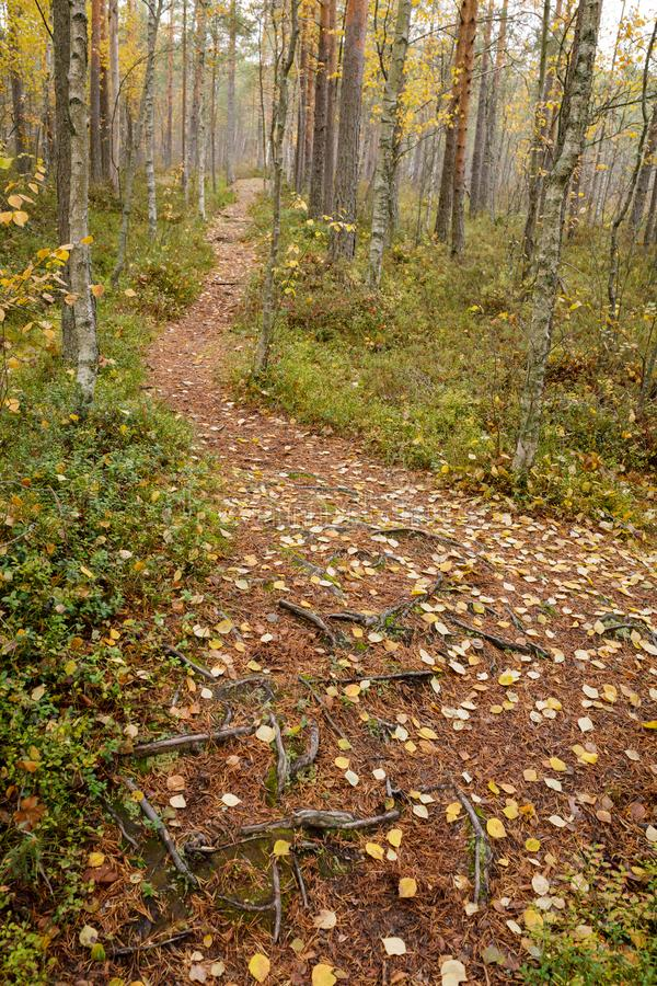 Footpath autumn forest landscape in Finland. At cloudy day royalty free stock photography