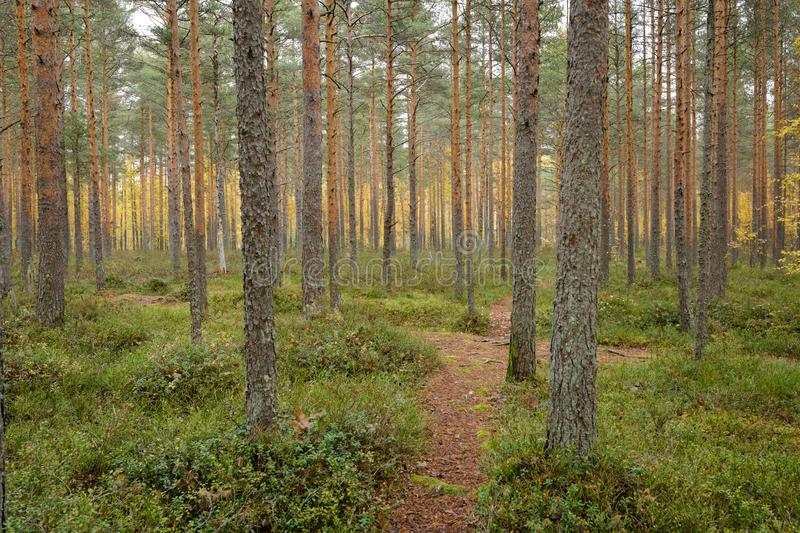 Footpath autumn forest landscape in Finland. At cloudy day stock images