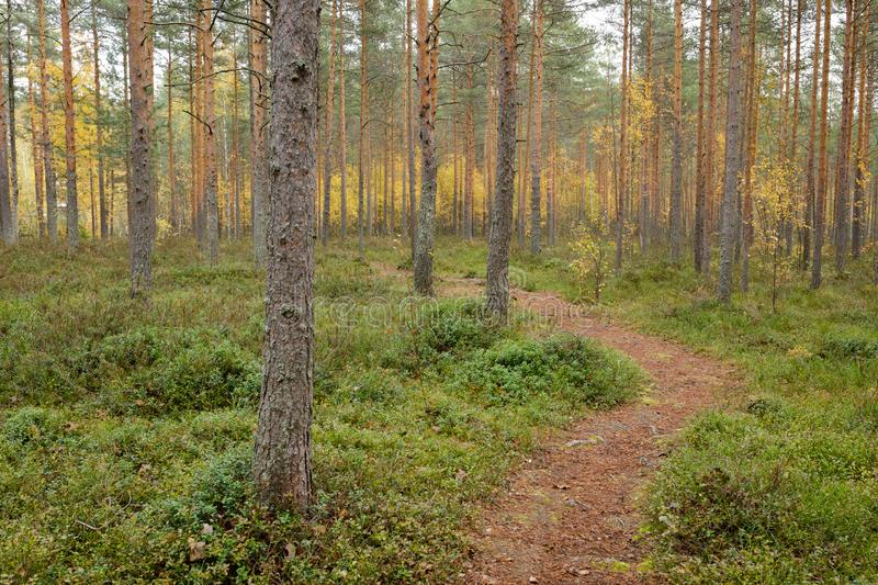 Footpath autumn forest landscape in Finland. At cloudy day royalty free stock images