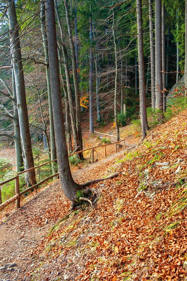 Footpath through autumn forest in late autumn stock image