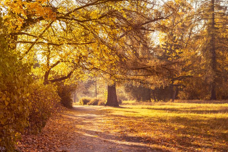 Footpath in a beautiful colorful autumn park.  stock photography