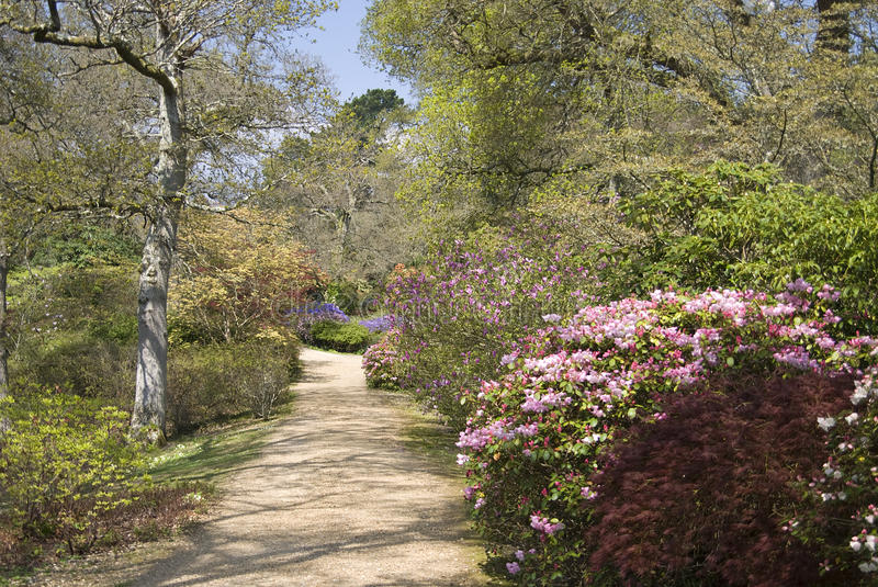 Download Footpath Through Beautiful Trees And Shrubs In Spr Stock Photo - Image: 13854780