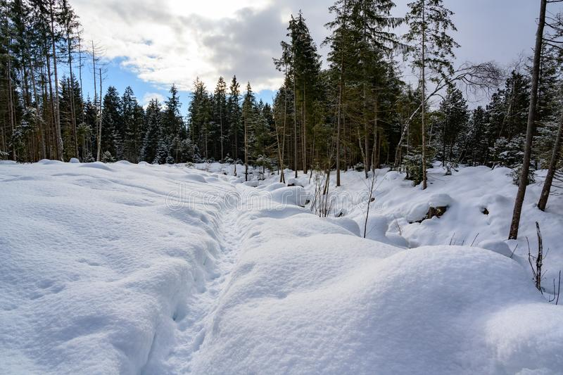 Path through beautiful snowy winter landscape and fir forest in South Germany. royalty free stock photo