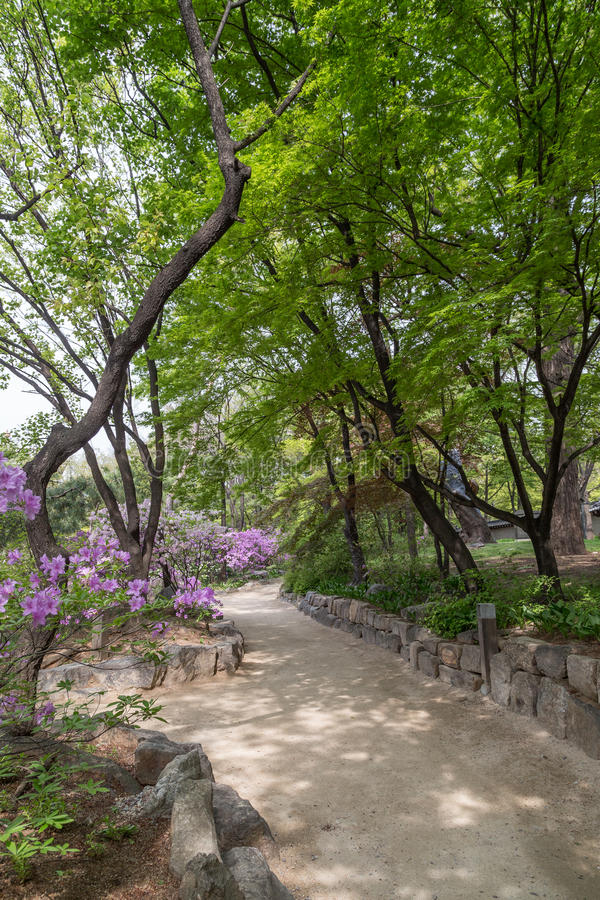 Footpath behind the Deoksugung Palace in Seoul. Verdant trees and a footpath behind the Deoksugung Palace in Seoul, South Korea royalty free stock photos