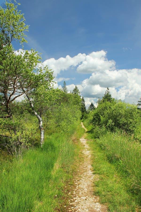 Footpath through bogland, nature protection area. Bavarian landscape royalty free stock photos
