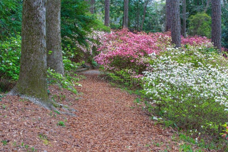 Footpath Callaway Gardens Pine Mountain Georgia. Pedestrian path through spring blooming azaleas in Callaway Garden, a tourist attraction located in Pine stock photos