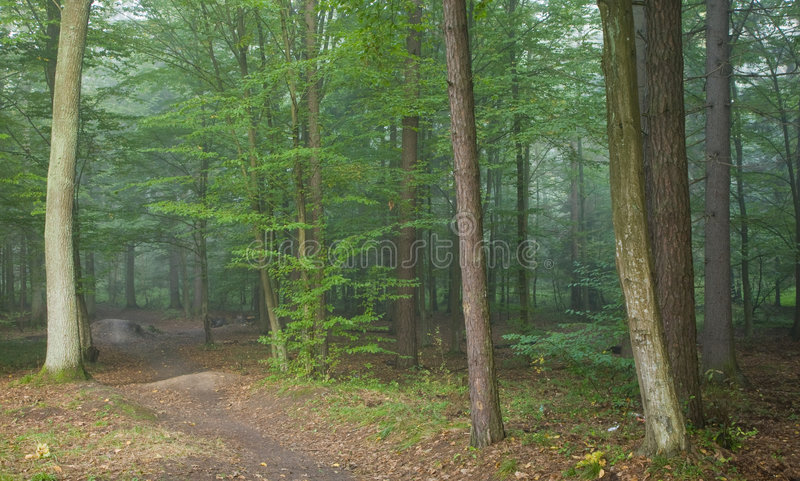 Download Footpath Crossing Misty Autumnal Forest Stock Photography - Image: 7187162