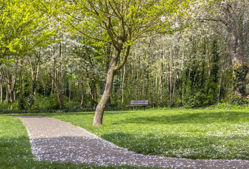 Footpath in a flowered park. Green and flowering trees. Bright gozon stock photo