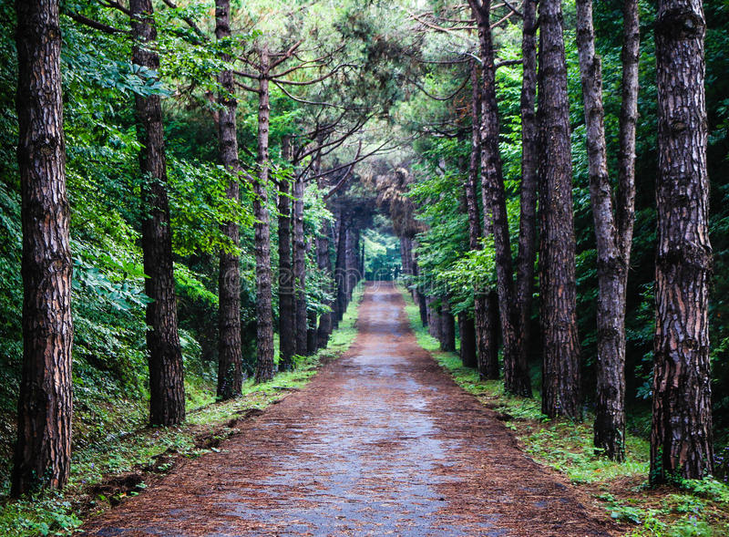 Footpath in forest stock image