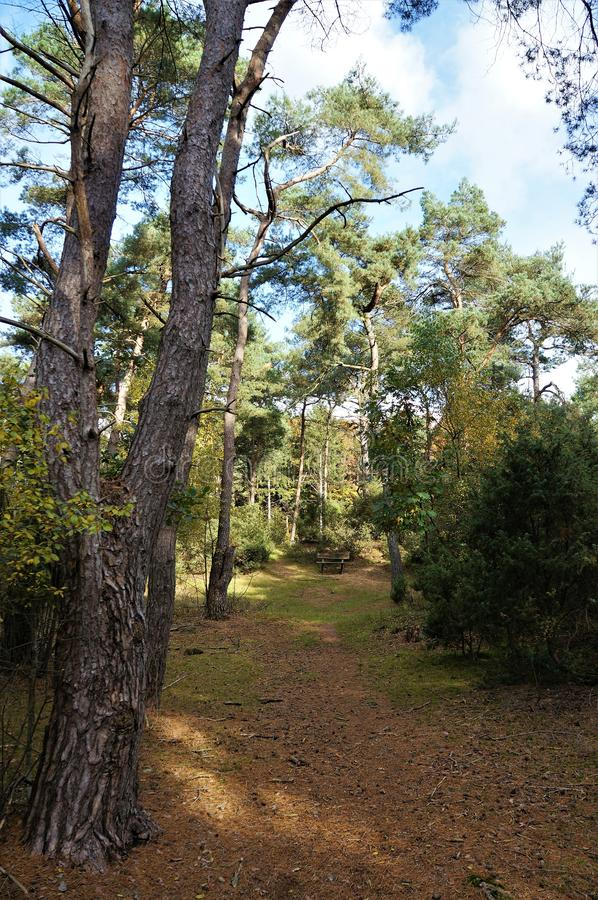 Footpath in a forest in Holland royalty free stock photos